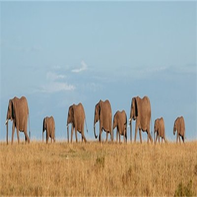 Botswana is Larger than Life