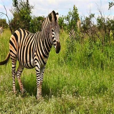 A Wild Weekend in Swaziland