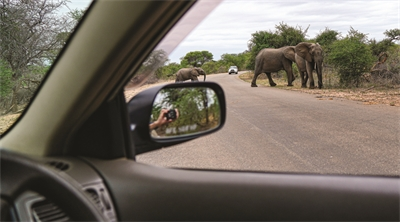 A drive-thru safari in Kruger National Park