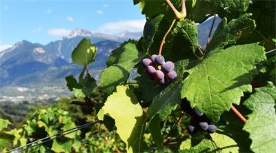 Swiss celebrate the grape in a happy Vallée