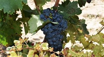 Having a vine time in Spain