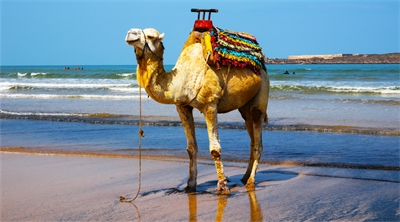 Surf's up in Morocco