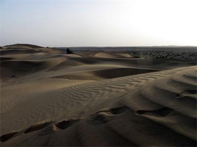 Galloping through India's Desert
