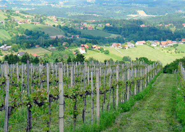 Austrian Wine as Sweet as the Country