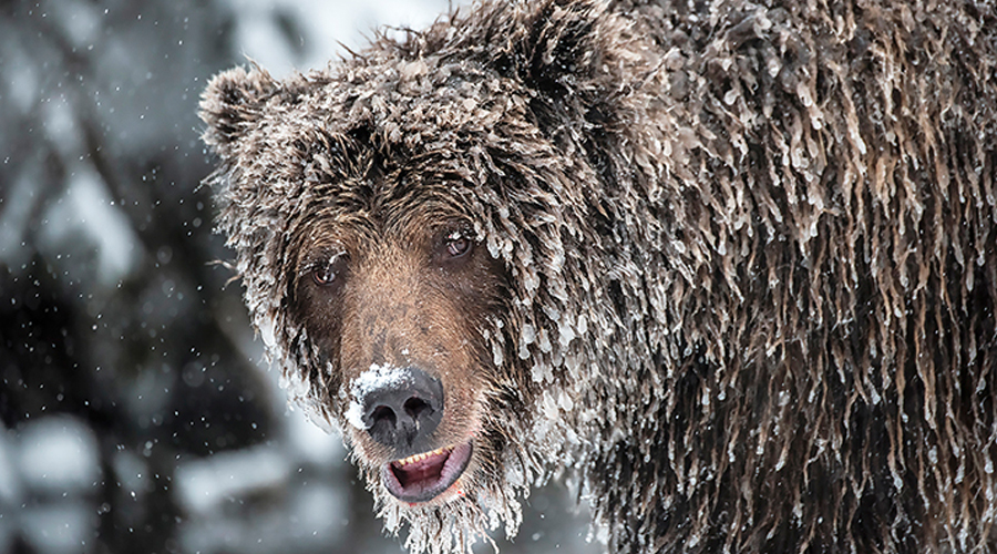 The 'Bear Facts' about Landscape Photography