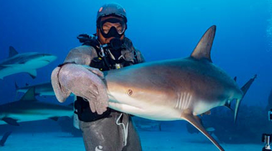 Holidaying with sharks in the Bahamas
